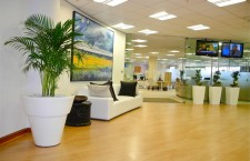 5 benefits of adding plants to the office environment